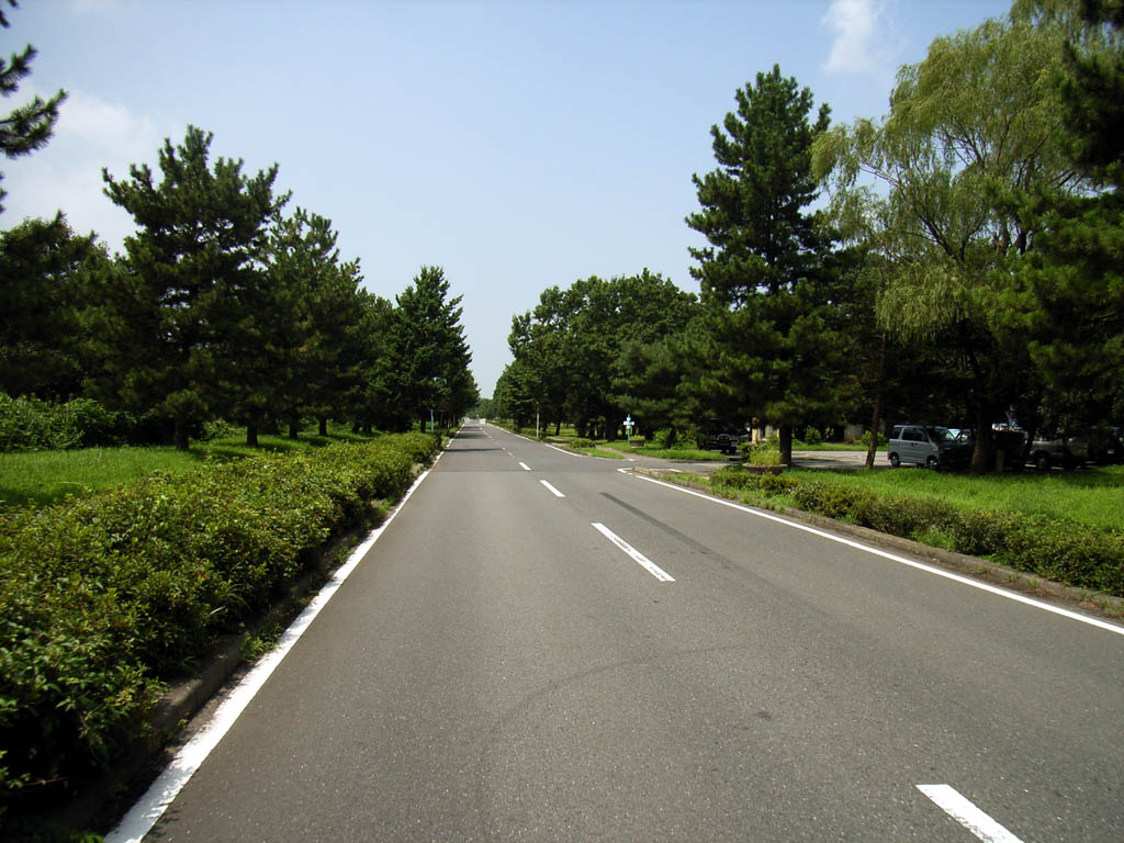 壁紙 - 秋ヶ瀬公園